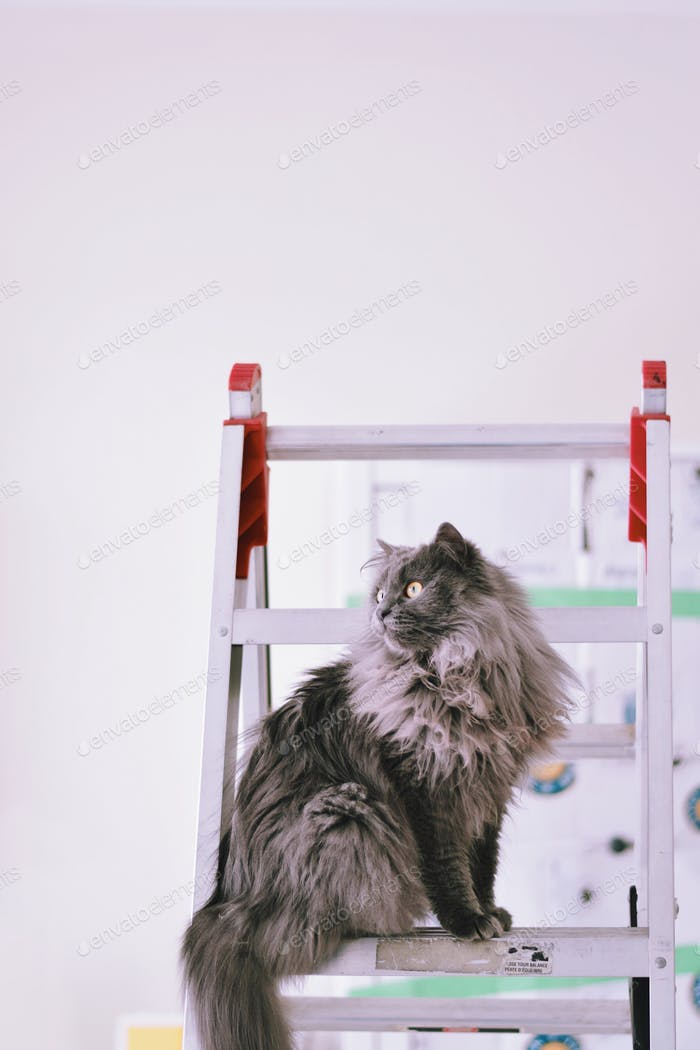 Cute little gray kitty is sitting on a ladder helping with the renovations