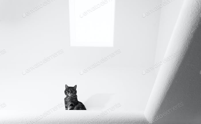 Cat up above