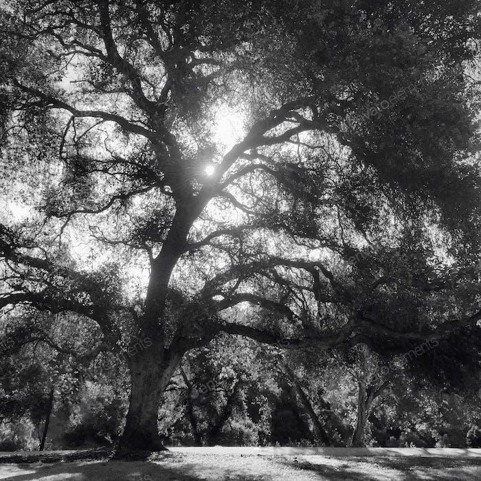 Daydreaming in Balboa Park, San Diego, California.