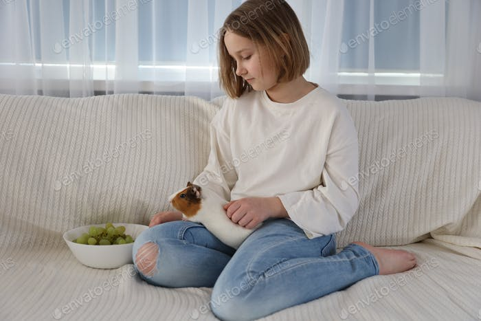Little girl plays with guinea pig on the couch. Care of Pets.