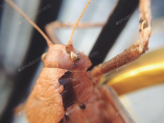 Makro-Insekt