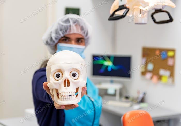 Selective focus of dentist holding a human skull model, dental model, teeth, jaw.