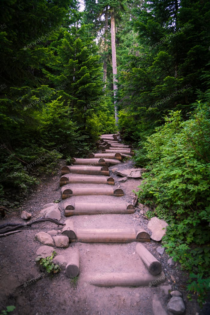 Forest trail maintained steps