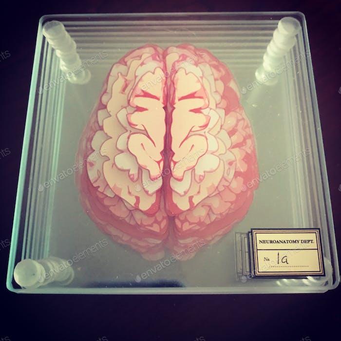 Brain Untersetzer
