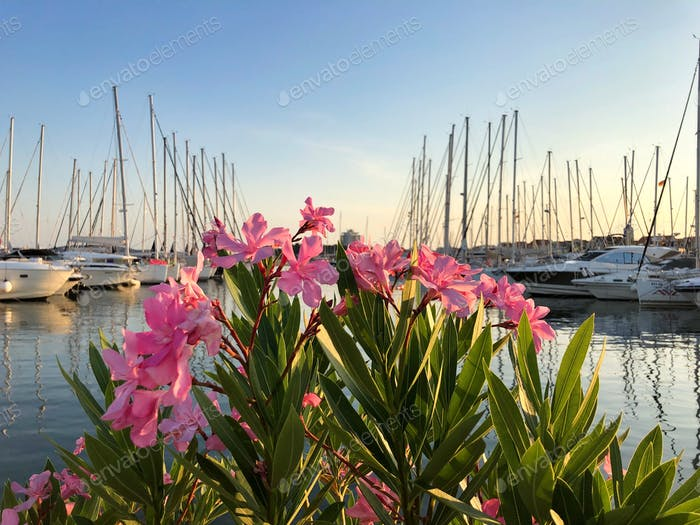 Flowers and sailboats