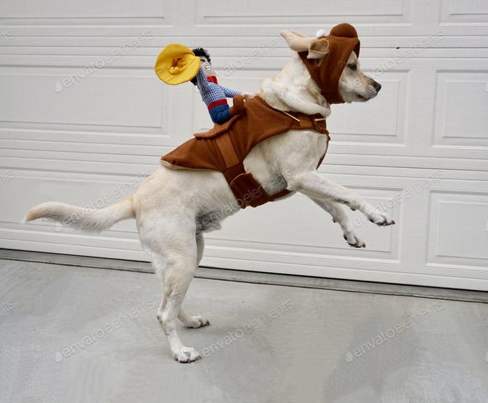 A dog jumping up dressed in a bull costume with a cowboy on his back