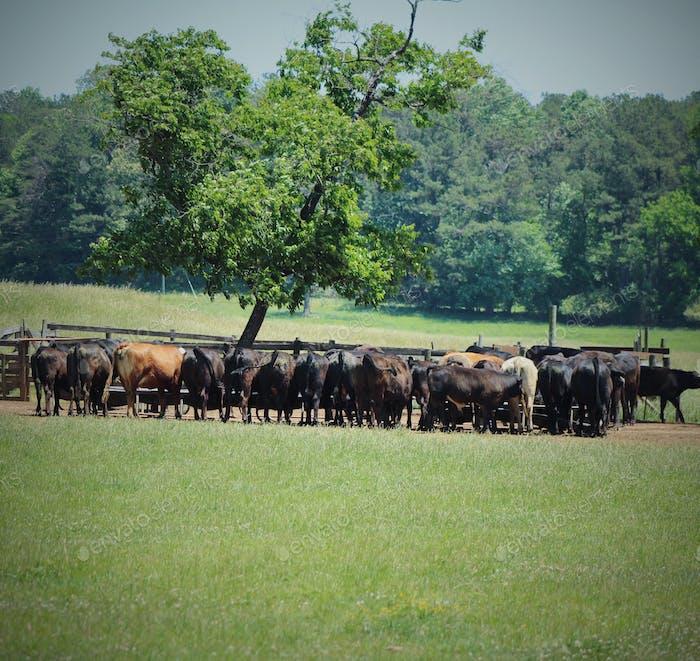 Livestock farmhouse