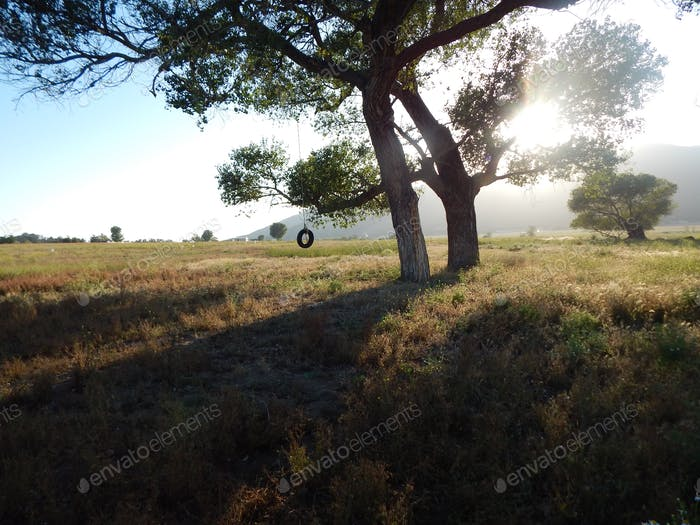 Tree swing on viejas reservation