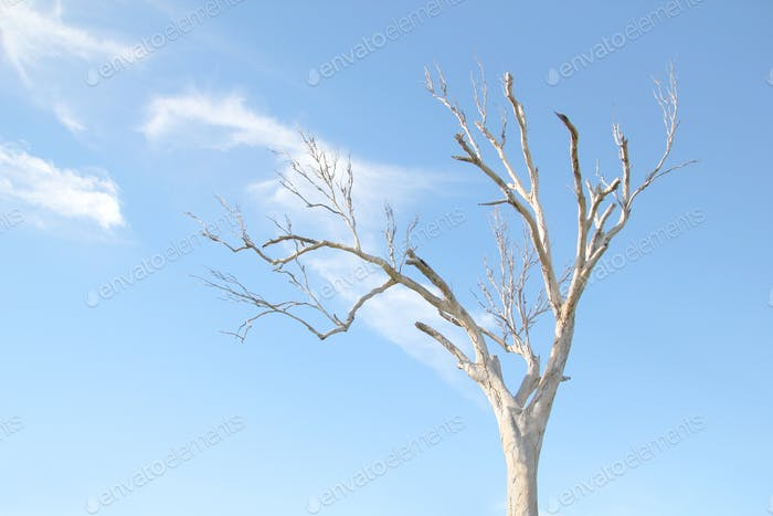 Naked tree against a pale blue sky