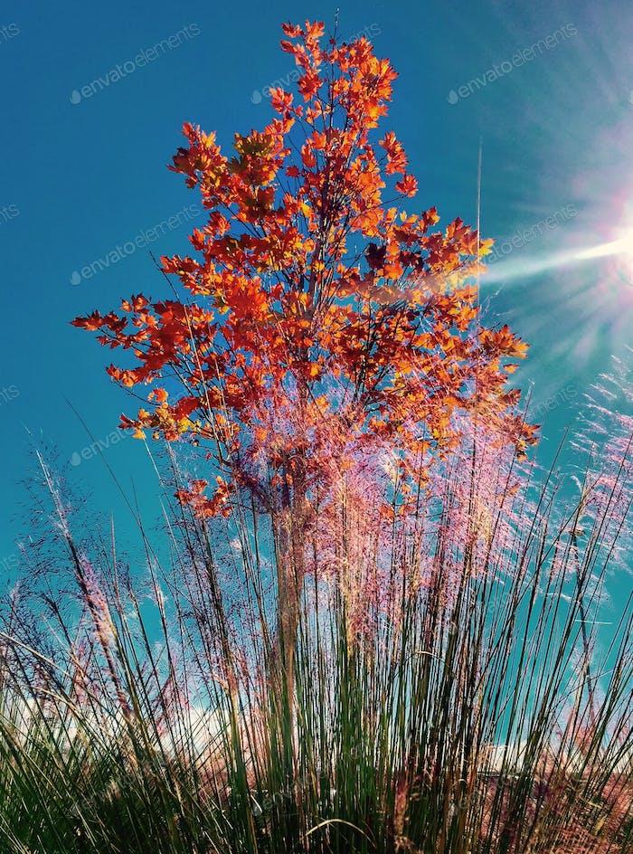 Sunbeams illuminate fading tree