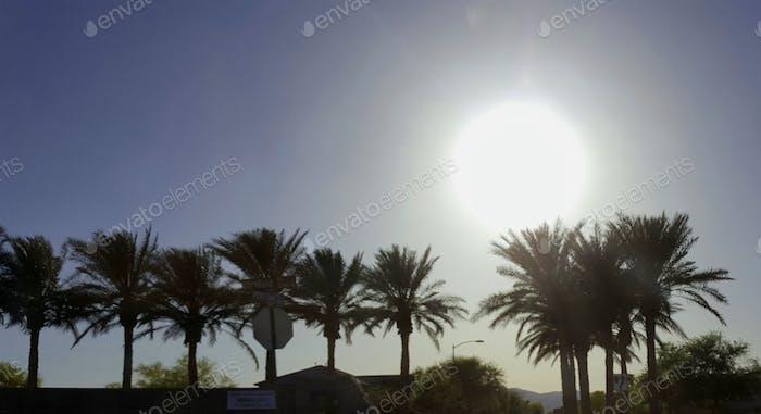 Puesta de sol en Arizona sobre una hilera de palmeras. Enorme bola solar tan brillante como podría ser. La naturaleza es mejor.  Sol