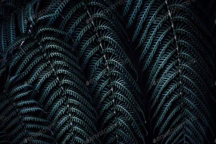 Fondo natural, helecho verde, hojas, patrón natural, textura natural, nuestro planeta