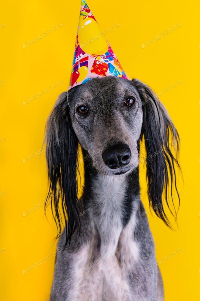 niedlicher Hund mit einem Geburtstagspartyhut sitzt auf einem isolierten gelben Hintergrund
