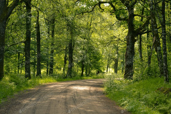 Road and lush trees