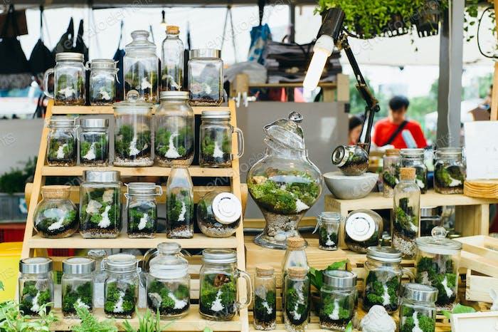 Tree terrarium shop
