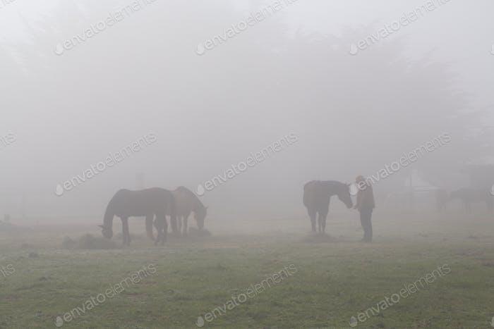 Morning Fog & the Horses