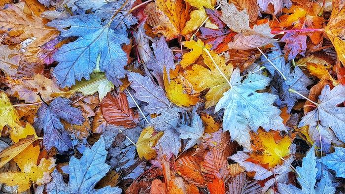 Backround fall