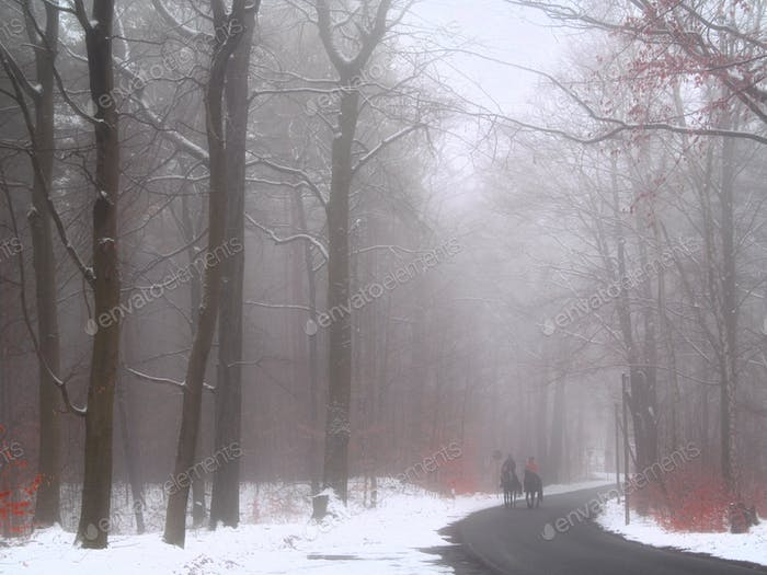 Autumn foggy day in the woods with horseback riders