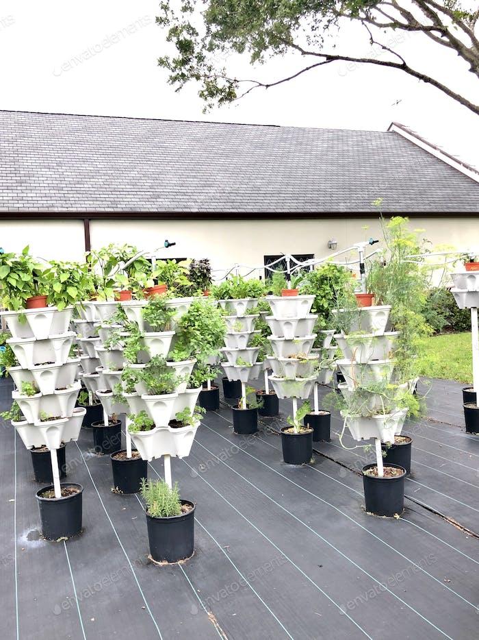 Gartenarbeit, hydroponische Gartenarbeit