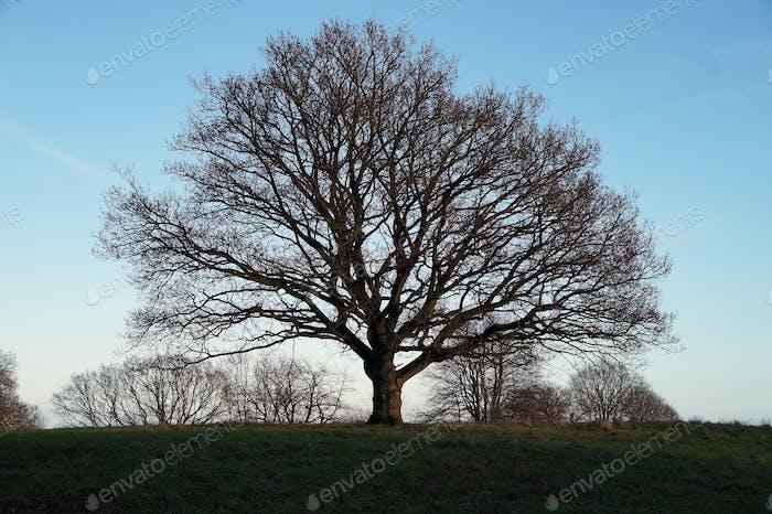 El majestuoso árbol