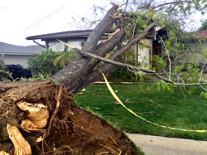 Natural disasters effect on property. A tree falls on a family home in a suburban neighborhood