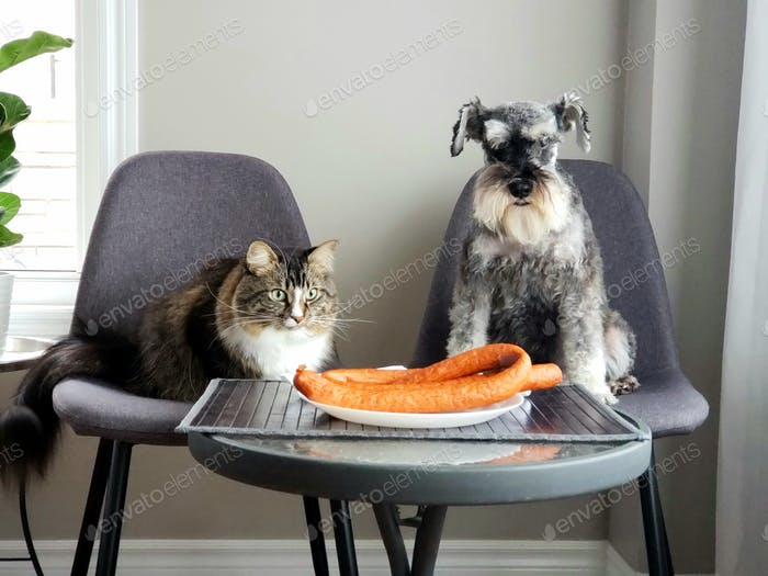 Animals acting like humans, animals feeding, adorable pets, cat and dog, pet behavior, adorable pets