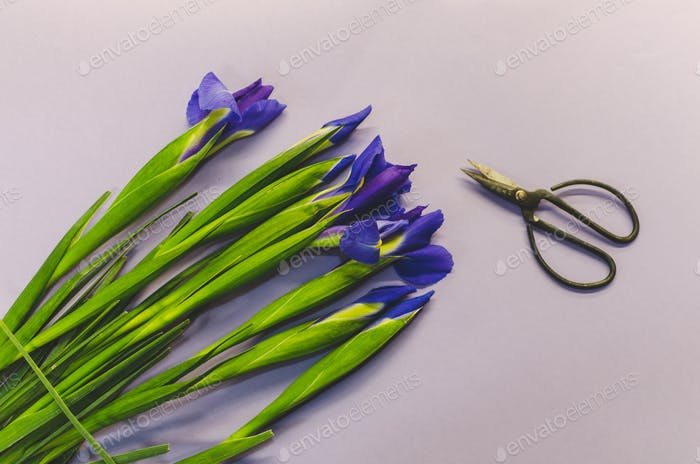 Purple Iris Flower Bouquet with Cutting Shears