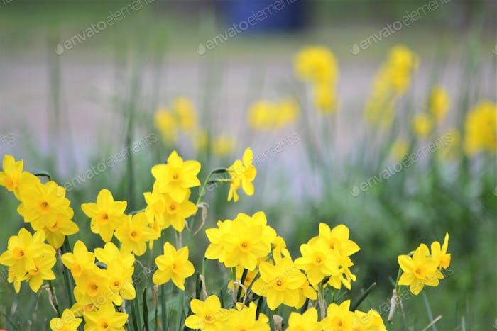 Yellow #flowersphotography #flowersphoto #flowerstalking #flowerday #flowersday #flowerslove