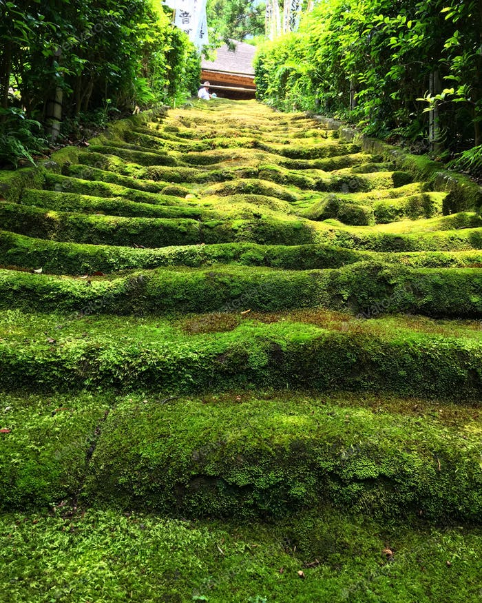 Moss covered stone steps at Sugimoto-dera temple in Kamakura, Japan.