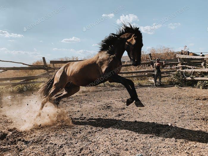 Pferderücken im Fahrerlager bei Sonnenuntergang, Nutztiere, Haustiere 🐴 bereits nominiert 🐴
