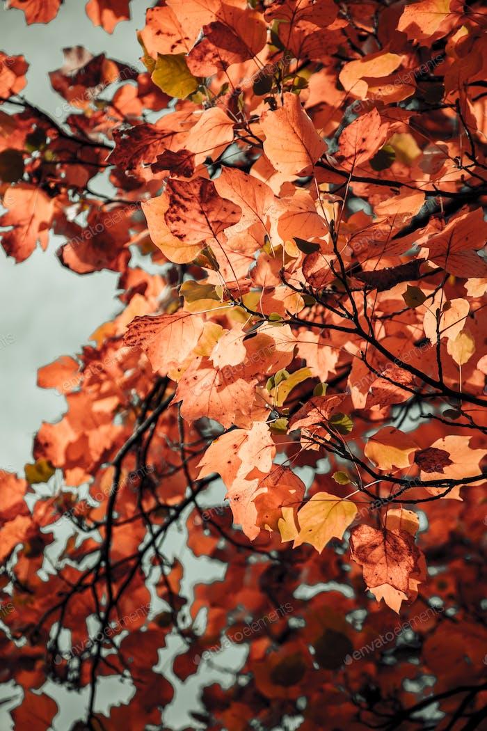 Vista de ángel baja de las hojas en el árbol durante el otoño