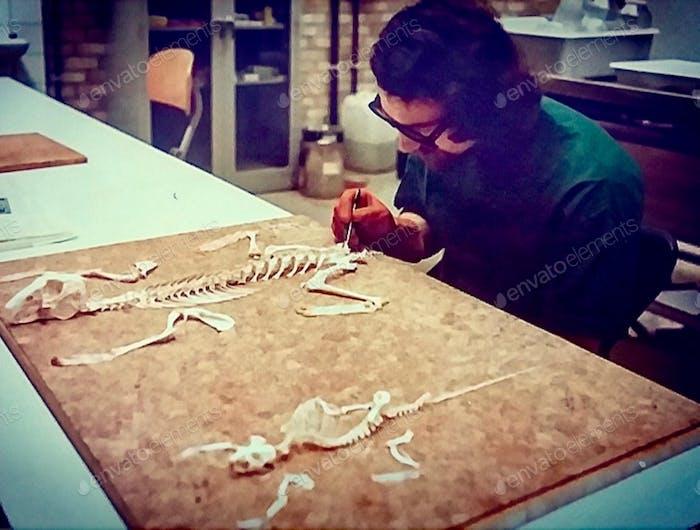 Man assembling animal skeletons