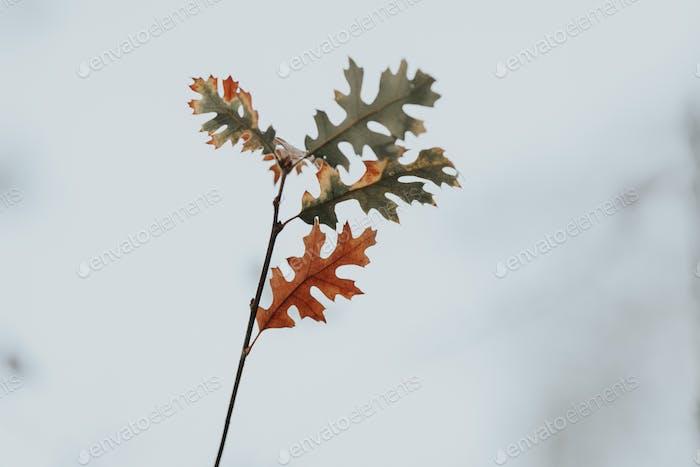 Herbst, minimalistisch, Blätter, Jahreszeiten