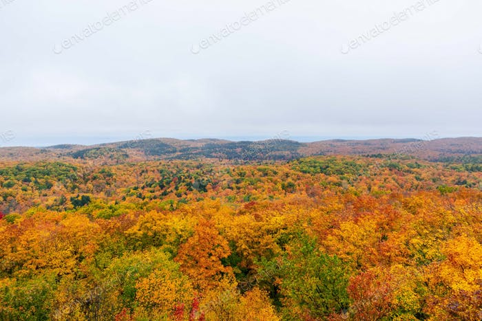 Peak colors on a misty fall morning in Porcupine Wilderness State Park