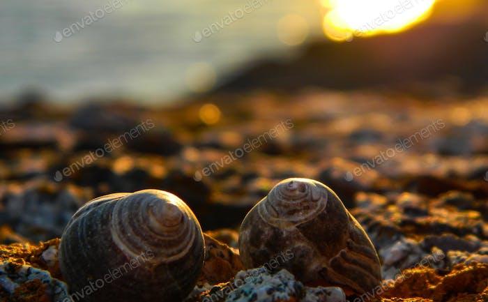 Seashells and sunsets