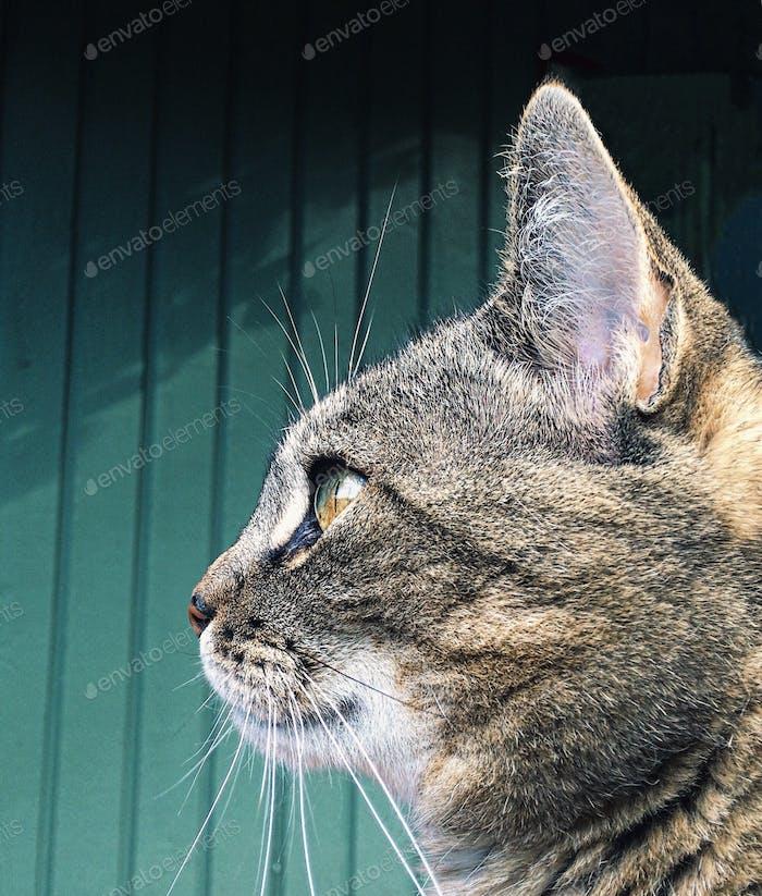 Schnurrhaare auf Kätzchen...