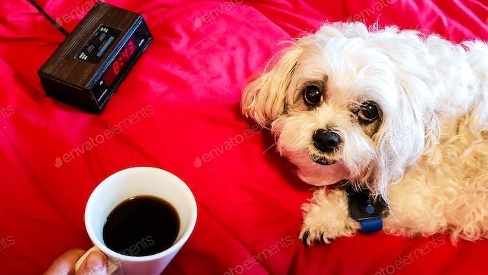 Good morning cute white doggie , it