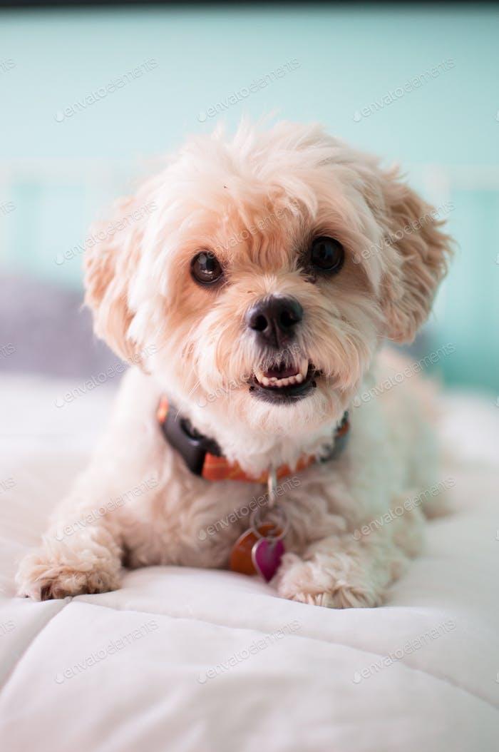 Happy pup //