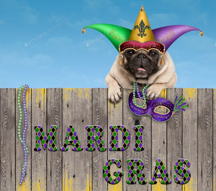 funny smiling pug puppy dog with harlequin jester hat and venetian mask