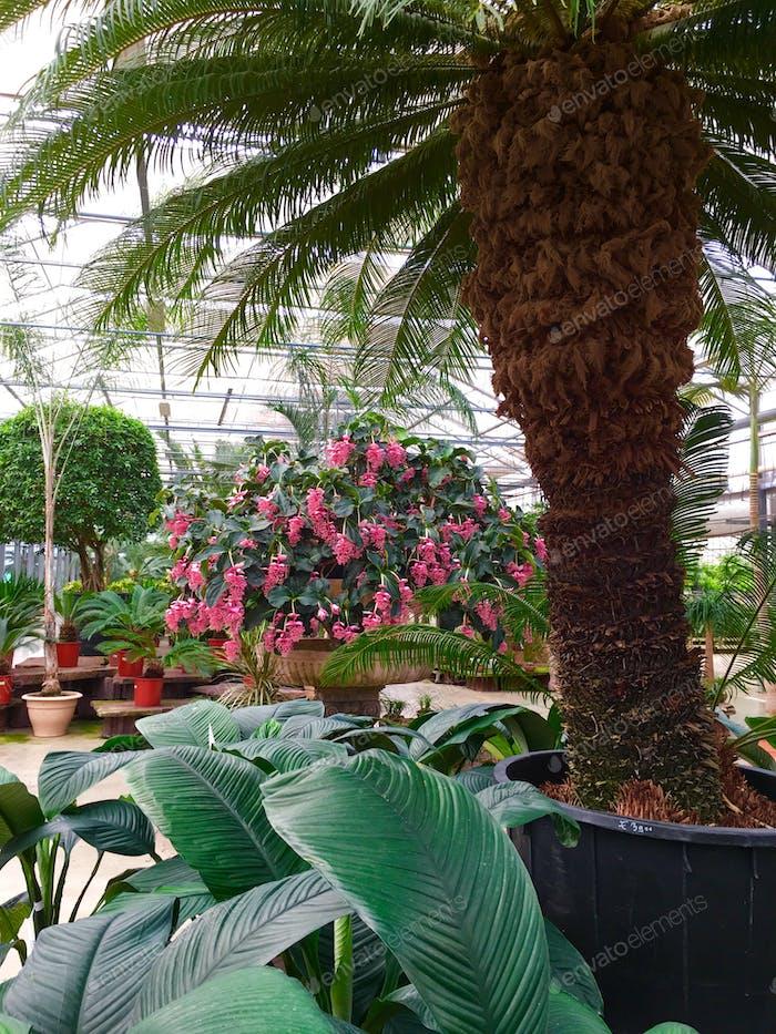 🍃🌸🌴 (Sub)tropical plants 🌴🌸🍃