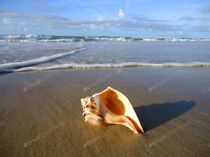 Conch shell laying on the beach just beyond the reach of the surf in the morning - travel