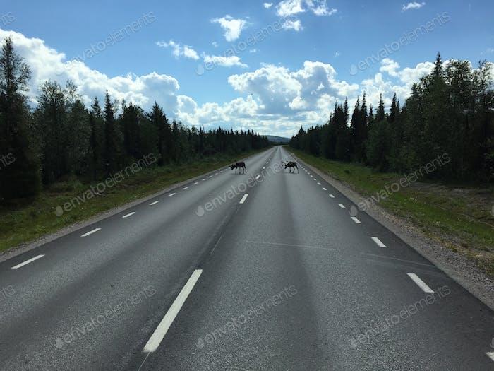 Last summer in Swedish Lapland .....