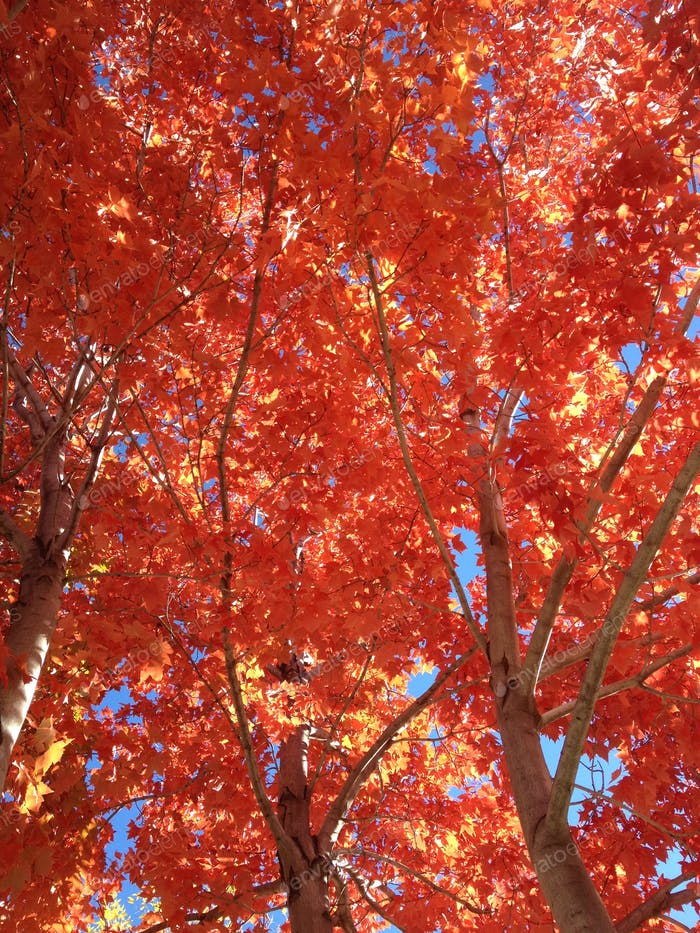 These Trees Are On Fire