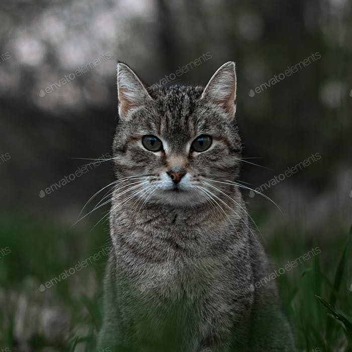 Cute tabby cat in park.     #NOMINATED!#