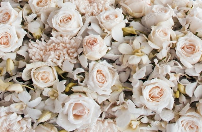 Soft Colored Roses