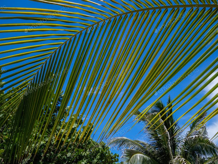 Palm Fond And Tropical Tree Tops Against A Blue Sky