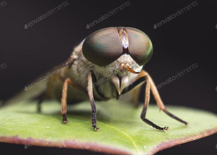 Insekt closeup