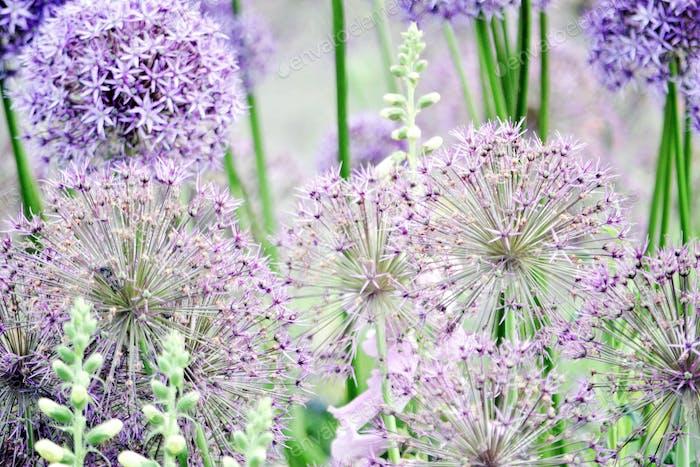 Springtime lavender flowers #flowersphotography #flowersphoto #flowerstalking #flowerday #flowersday