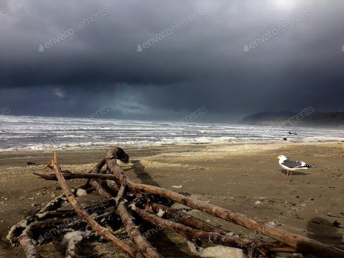 Coastal storms are beautiful