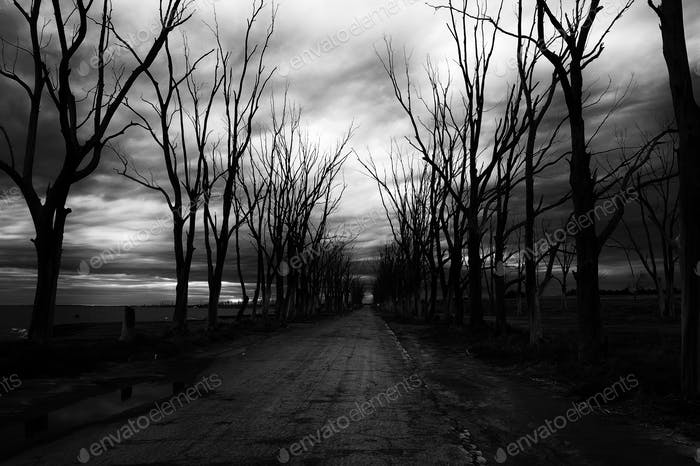 old abandoned road to Epecuen ghost town, surrounded by scary dry trees on a stormy day